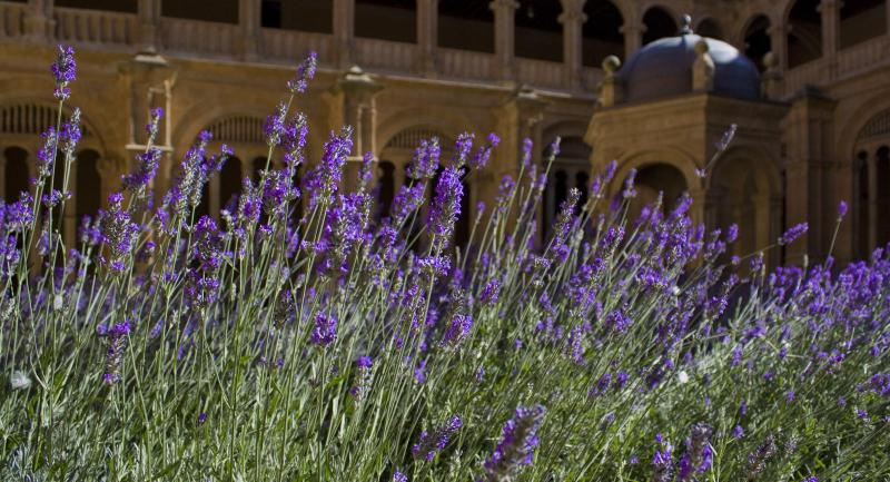 Lavender and the Little Things